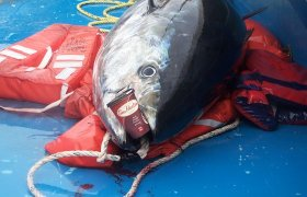 Tuna fishing in Nova Scotia